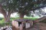 కొత్తరాతియుగం:తెలంగాణలో పశుపాలకవ్యవస్థ (కురుమ) సంస్కృతి