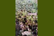 అనప పువ్వులు - పుస్తక పరిచయం
