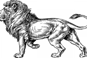 సింహం చిట్టెలుక మధ్యలో నక్క