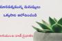 మానవత్వమున్న మనుష్యులు ఒక్కసారి ఆలోచించండి