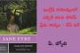 ఇంగ్లీష్ సాహిత్యంలో ఎప్పటి నిలిచి పోయే ప్రేమ కావ్యం - జేన్ ఐర్