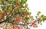 మానస సంచరరే-63: మంచి మార్పు.. మనోకాంక్ష!
