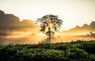 మానస సంచరరే-65: చివరాఖరులు.. చివురులు!